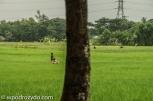 bangla1-18